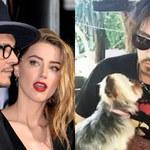 Żona Johnny'ego Deppa zostanie ukarana. Za szmuglowanie psów do Australii!
