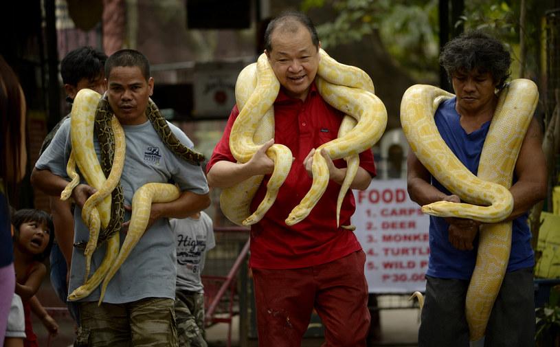 Zoo w Manilii - prezentacja wężów dla turystów /AFP