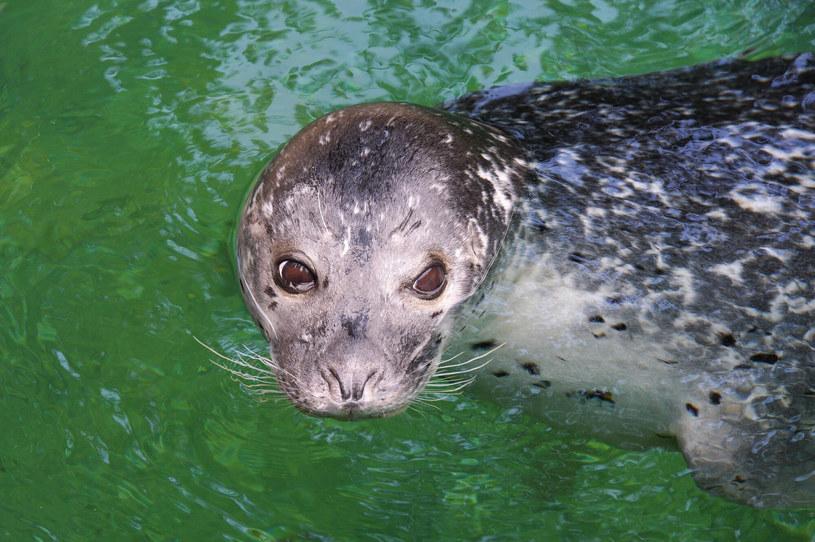 Zoo we Wrocławiu pełne jest niezwykłych zwierząt /Gerard /Reporter