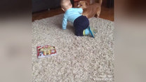 Zostawili dziecko z psem. I się zaczęło