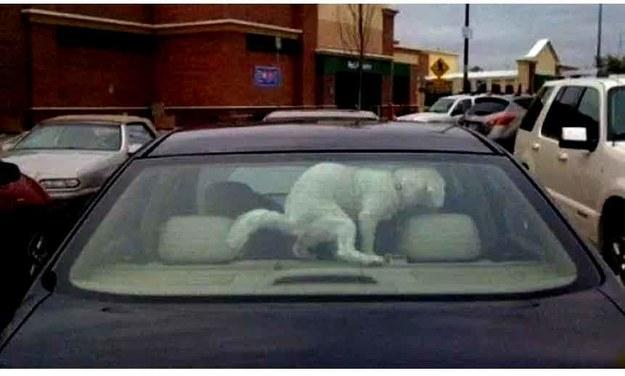 Zostawiliście mnie na długo w samochodzie...