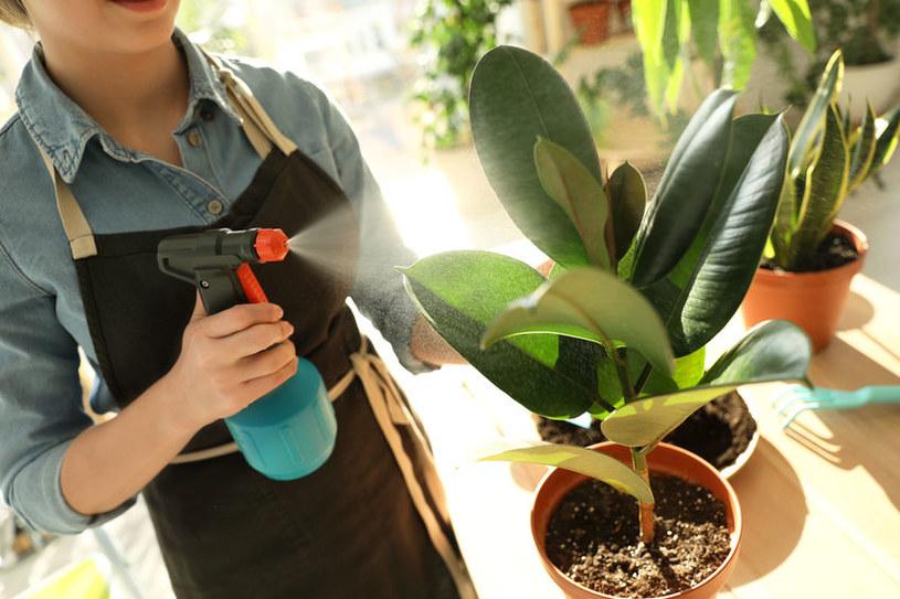 Zraszanie roślin /©123RF/PICSEL