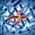 Zsekwencjonowano chromosom X