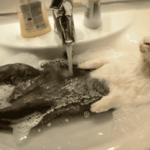 Zwierzaki w trakcie kąpieli! Komiczny widok!