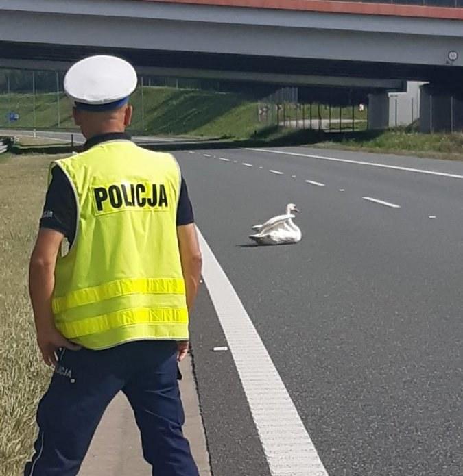 Zwierzę blokowało jeden z pasów ruchu /Policja /Policja