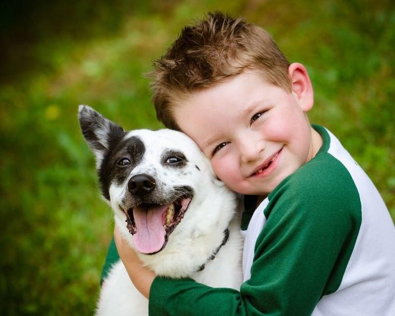 """Zwierzę jest żywą istotą, a nie kolejnym kaprysem czy """"zabawką"""" dla dziecka /123RF/PICSEL"""