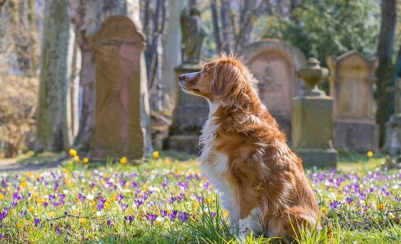 Zwierzę nieustannie czuwa! /Pixabay.com