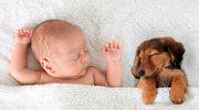 Zwierzę w domu - zdrowsze dziecko?