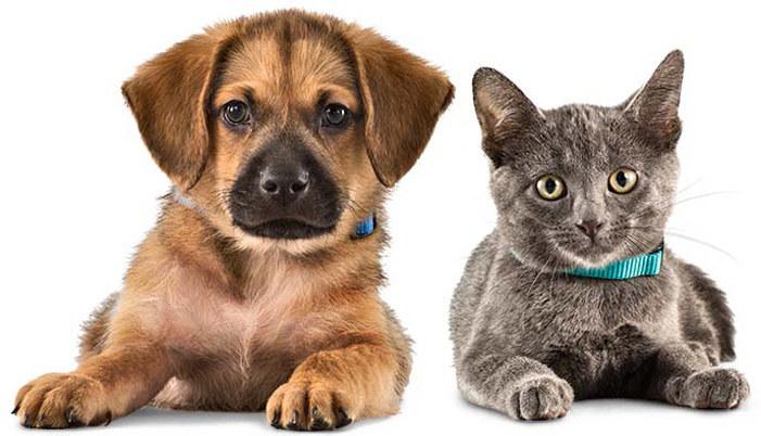 Zwierzęta domowe choroby /© Photogenica