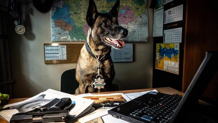 Zwierzęta, które służą w policji, będą mogły otrzymać państwowe wsparcie po przejściu na emeryturę /Policja