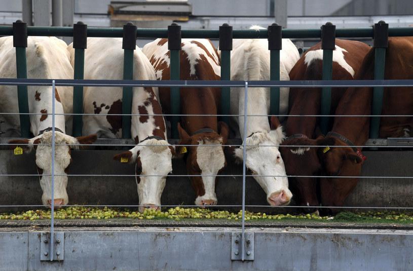 Zwierzęta mają swoje specjalnie wydzielone boksy /JOHN THYS / AFP /East News