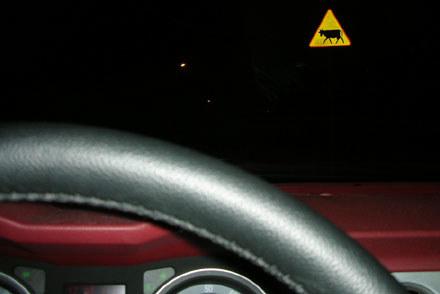 Zwierzęta na drodze to specyficzna sprawa / kliknij /INTERIA.PL
