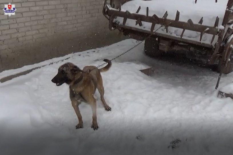 Zwierzęta nie miały żadnego schronienia /Policja