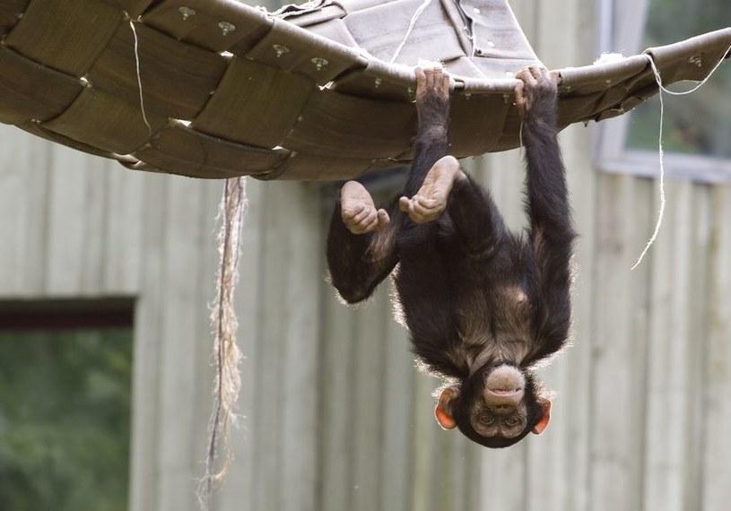 Zwierzęta nie są głupie. Wiele gatunków potrafi się uczyć, choć w inny sposób, niż ludzie /123RF/PICSEL