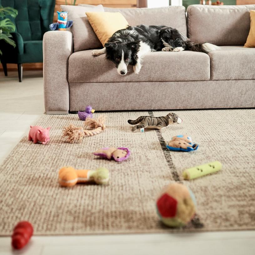 Zwierzęta potrzebują wolnej przestrzeni do zabawy /materiały prasowe