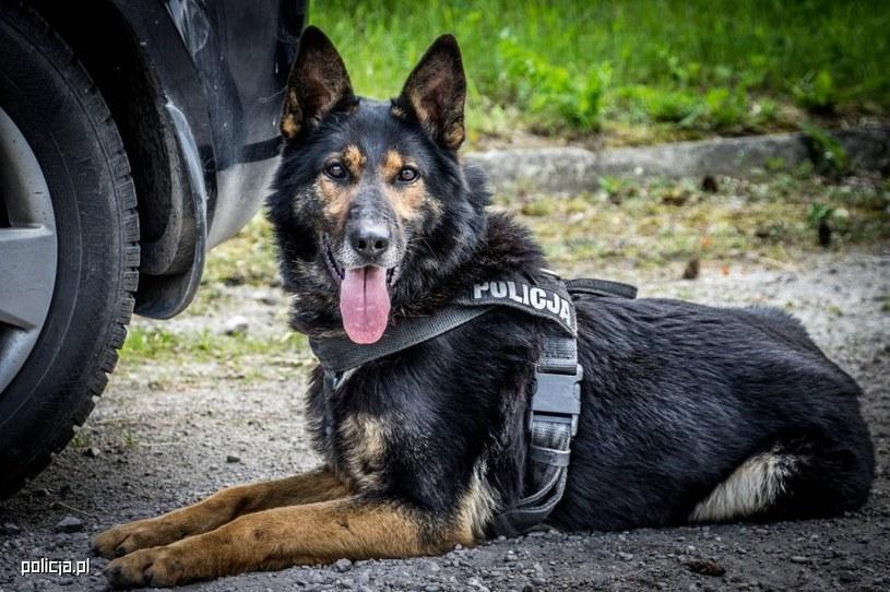 Zwierzęta pracujące w służbach mundurowych dostaną emeryturę /Policja