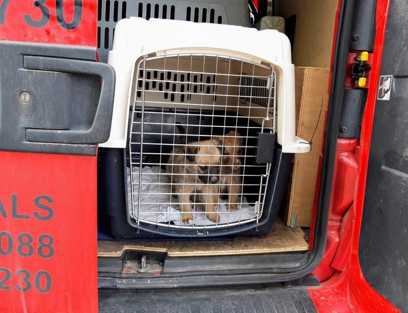 Zwierzęta przetransportowano do schroniska w Bydgoszczy /Policja
