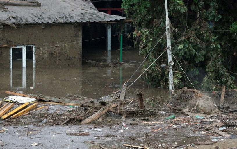 Zwierzęta uciekły z ZOO w Tbilisiw czasie powodzi /AFP