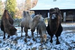 Zwierzęta zimą w krakowskim ZOO