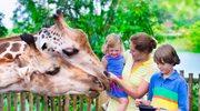 Zwierzyńce w Polsce: Wypoczynek dla całej rodziny