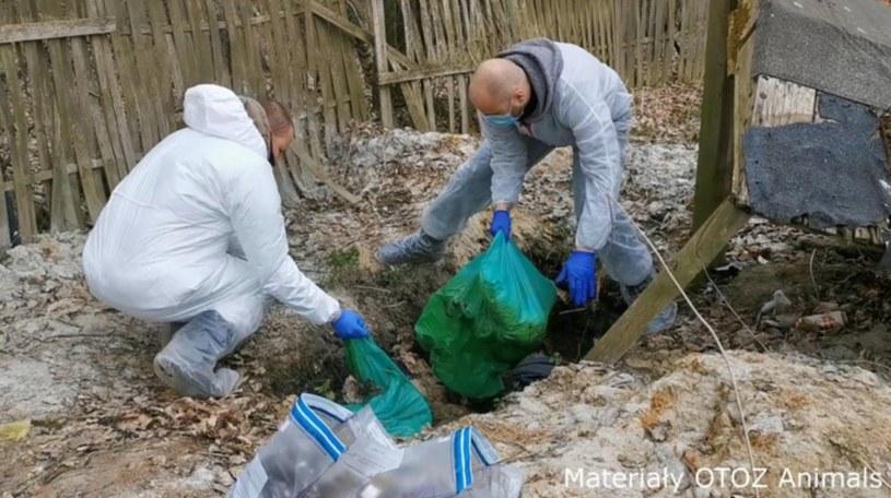 Zwłoki psów zakopywano w dołach (źródło: Polsat News) /