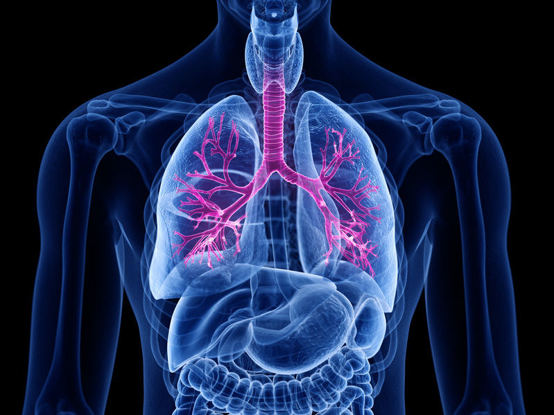Zwłóknienie płuc /©123RF/PICSEL