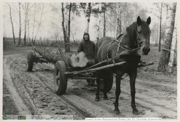 Zwózka drewna. Radzyminek ok. Płońska 1962 rok / Zdjęcia: zespół PAE Uniwersytet Śląski /&nbsp