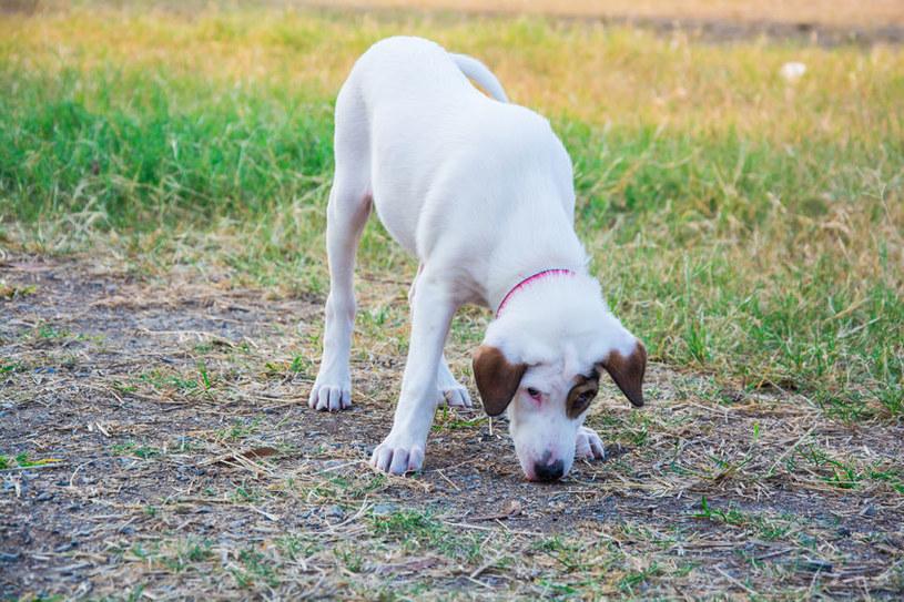 Zwyrodnienia stawów sprawiają, że pies nie ma ochoty na zabawę /123RF/PICSEL