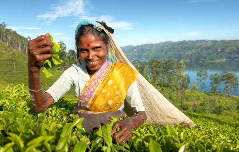Życie przeciętnej lankijskiej kobiety jest zależne od tego, jaką pracą się trudni /123RF/PICSEL