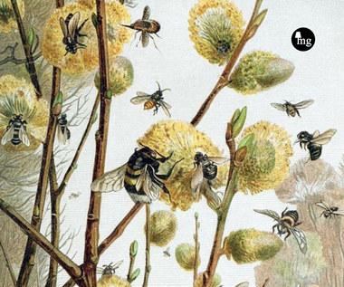 Życie pszczół, Maurice Maeterlinck