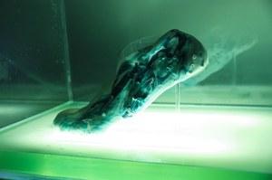 Żywe i samoregenerujące się buty z drukarki