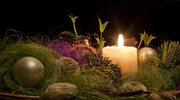 Żywe rośliny w dekoracjach świątecznych